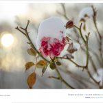 DSC 1608 150x150 - Fotoğraflar