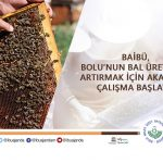 Akademik ARI banner 150x150 - BAİBÜ, Bolu'nun Bal Üretimini Artırmak İçin Akademik Çalışma Başlattı