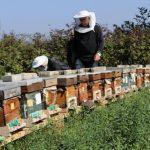 Ari hastaliklari bolu 4 150x150 - BAİBÜ, Bolu'nun Bal Üretimini Artırmak İçin Akademik Çalışma Başlattı